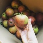Suikervrije appelmoes met dadels & kaneel